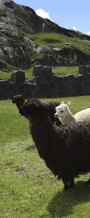 ペルーとの絆